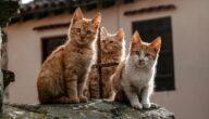 تربية القطط في الجزائر
