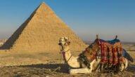 دراسة جدوى مشروع تربية الإبل في مصر