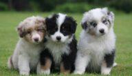طرق تربية الكلاب المنزلية