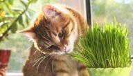 علاج أمراض القطط بالأعشاب