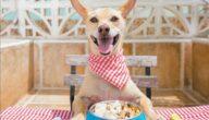 ماذا تأكل الكلاب