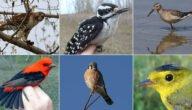 الطيور المهددة بالانقراض