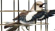 أضرار تربية الطيور في المنزل