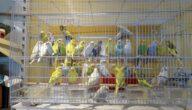 اجراءات الحصول على رخصة محل بيع طيور في مصر
