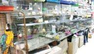 إجراءات الحصول على رخصة محل بيع طيور في الأردن