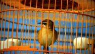 مشروع تربية الطيور في المنزل