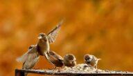 أفضل طعام للطيور و طرق تغذيتها
