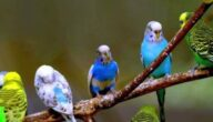 أفضل أنواع الطيور للتربية والإنتاج