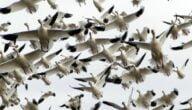 مشروع تربية الطيور في المغرب