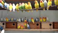 مستلزمات مشروع تربية طيور ناجح