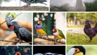 أغلى أنواع الطيور في العالم