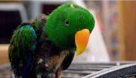 تجارة طيور الزينة في مصر