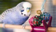 شروط التربية الصحيحة لطيور الزينة